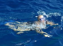Woman swimming in ocean stock photography