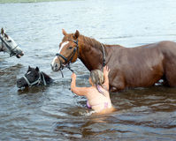 Woman swimming winth  stallion in river Stock Photography