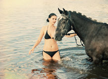 Woman swimming winth  stallion in river Royalty Free Stock Photo