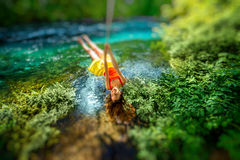 Woman swinging on the river. Happy young woman swinging with bungee above the river in the forest royalty free stock photo