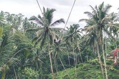 Woman swings in the deep jungle. Bali island. Woman swings in the deep jungle Royalty Free Stock Photos
