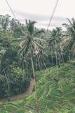 Woman swings in the deep jungle. Bali island. Woman swings in the deep jungle Royalty Free Stock Image