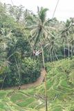 Woman swings in the deep jungle. Bali island. Woman swings in the deep jungle Stock Image