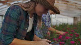 A woman with a tablet examines the flowers and presses her fingers on the tablet screen. Flower farming business stock video