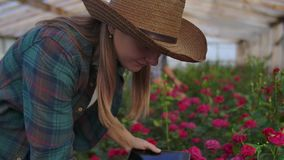 A woman with a tablet examines the flowers and presses her fingers on the tablet screen. Flower farming business stock footage