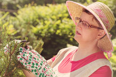 Woman take care of the garden Stock Image