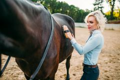 Woman take caring for the hair of brown horse. Young blonde woman take caring for the hair of brown horse. Equestrian sport, attractive lady and beautiful Royalty Free Stock Images