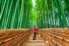 Woman take a photo at Bamboo Forest in Kyoto, Japan.  Stock Images