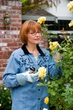 Woman takes care for roses on frontyard. Woman is having good time with her hobby by cutting roses in her frontyard stock images