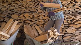 Woman takes firewood from warehouse and puts them in the cart for transportation. Caucasian mature fat woman on a ranch or in the countryside neatly puts the stock video