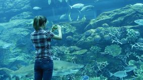 Woman takes pictures in a giant aquarium in Dubai stock video