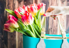 Woman taking a bouquet of tulips. On the wooden background Royalty Free Stock Photo