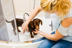Woman showering her dog stock image