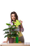 The woman taking care of plants isolated on white Stock Image