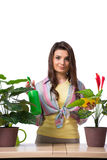The woman taking care of plants isolated on white Stock Images