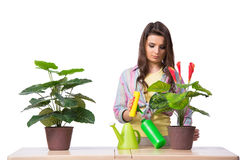 The woman taking care of plants isolated on white Royalty Free Stock Photo