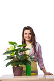 The woman taking care of plants isolated on white Royalty Free Stock Image