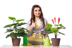 The woman taking care of plants isolated on white Stock Photos