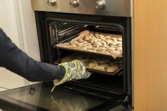 The woman taking out the cookies from the oven stock photography
