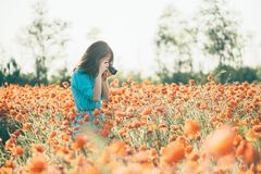 Woman taking a photo with camera the poppy field. stock photo