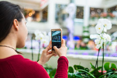 Woman taking photo of flower with mobile cell phone.. Royalty Free Stock Image