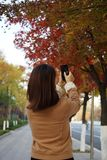 A woman is taking photoes in fall Stock Photo