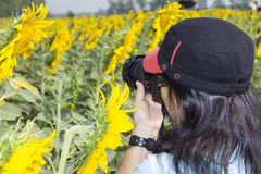 Woman taking photograph Stock Photos