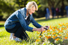 Woman taking photographs flowers Stock Photos