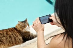 Woman Taking Photos To Cat. Woman taking photos of her cat with smartphone, closeup view, selective focus royalty free stock photos