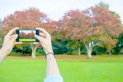 Woman taking picture Stock Images