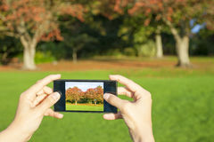 Woman taking picture Royalty Free Stock Photo