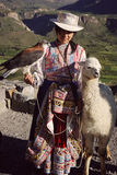Woman with a tame hawk and a llama in Yanque in Peru Royalty Free Stock Images