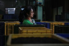 Woman in tea factory royalty free stock images