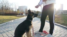 A woman teaches a dog a team. German shepherd training in the park