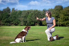 Woman teaches her dog a command. Woman training her dog and teaches her dog a command by pointing her finger Stock Photo