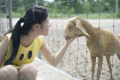 Woman tease a goat in paddock, play with a goat Stock Photos