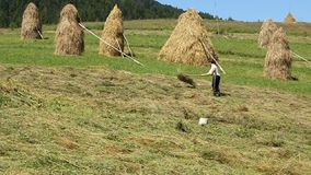 Woman ted the hay stock video footage