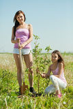 Woman with  teenager daughter setting tree. Mid adult woman with  teenager daughter setting tree outdoor Royalty Free Stock Photography