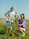 Woman with  teenager son setting tree. Mid adult woman with  teenager son setting tree outdoor Stock Photos