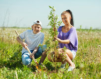 Woman with  teenager son setting tree Royalty Free Stock Image