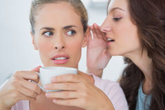 Woman telling secret to her friend. While drinking coffee royalty free stock photo