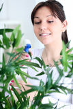 Woman tending and cultivating flowers Royalty Free Stock Photography