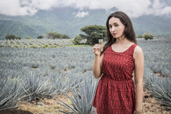 Woman and tequila. Mexican agave landscape with woman and tequila Royalty Free Stock Photos
