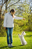 Woman with terrier Stock Images