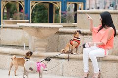 A woman and three dogs Royalty Free Stock Photo