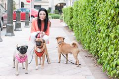 A woman and three dogs Stock Photos