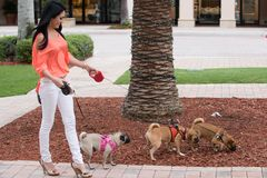 A woman and three dogs Royalty Free Stock Photos