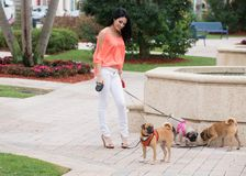 A woman and three dogs Stock Photo
