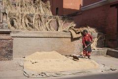 Woman threshing grain Royalty Free Stock Image