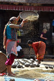 Woman threshing grain in traditional way in Nepal Royalty Free Stock Photography